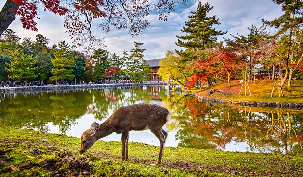 Kết quả hình ảnh cho Công viên Nara