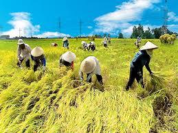 Mùa thu hoạch