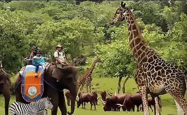 vuon-thu-tama-safari-bogor-indonesia