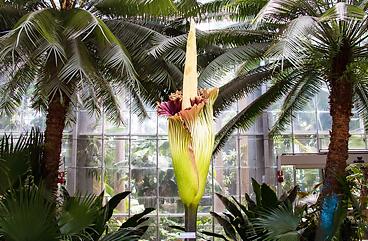 bogor-botanical-bardens