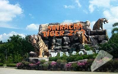 vuon-thu-sriracha-tiger-zoo-thai-lan
